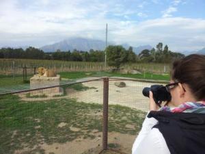 8 Lions Park (49)