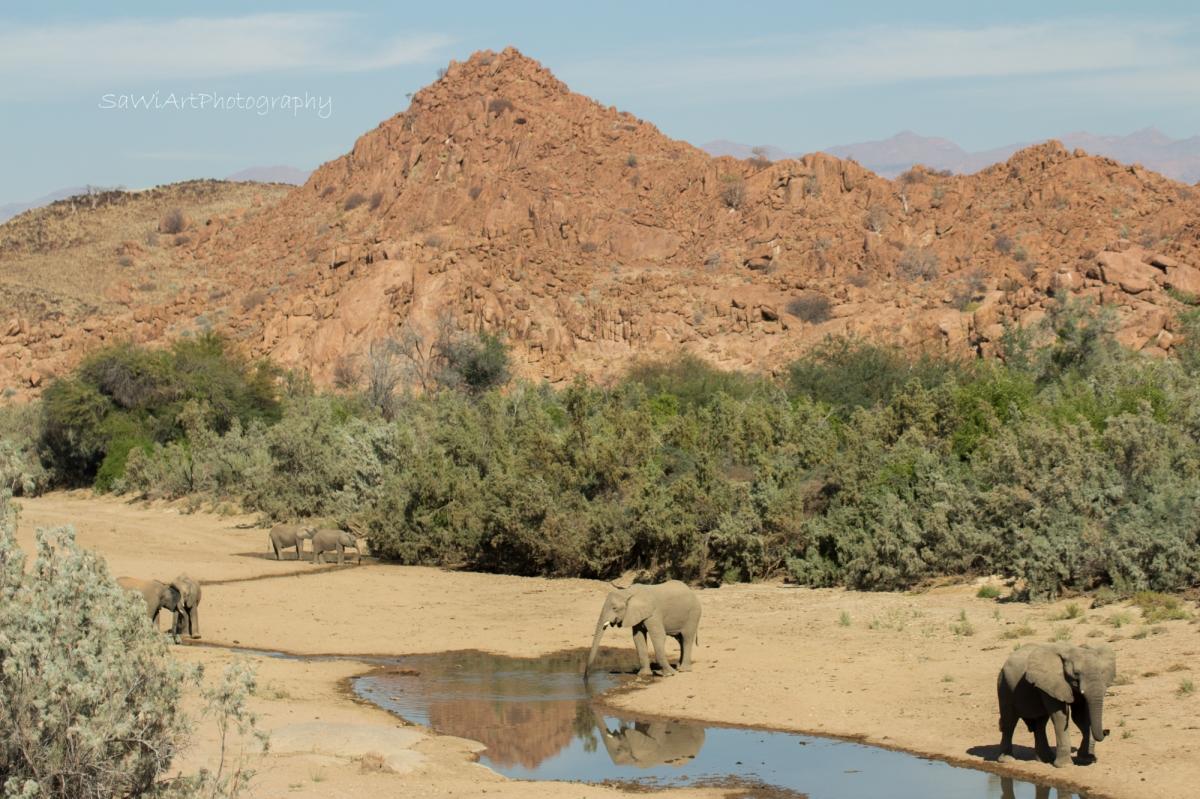 EHRA – Elephant-Human Relations Aid inNamibia