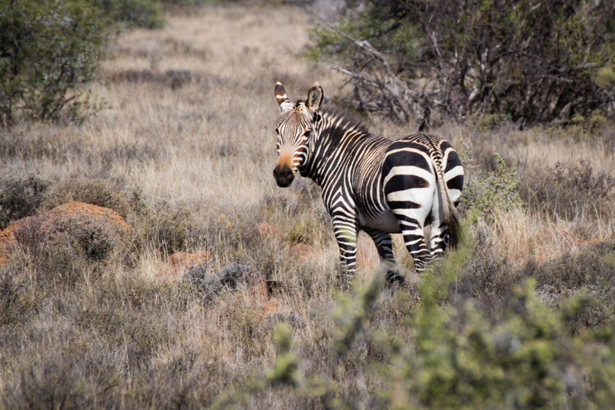 South Africa ♥ Karoo National Park