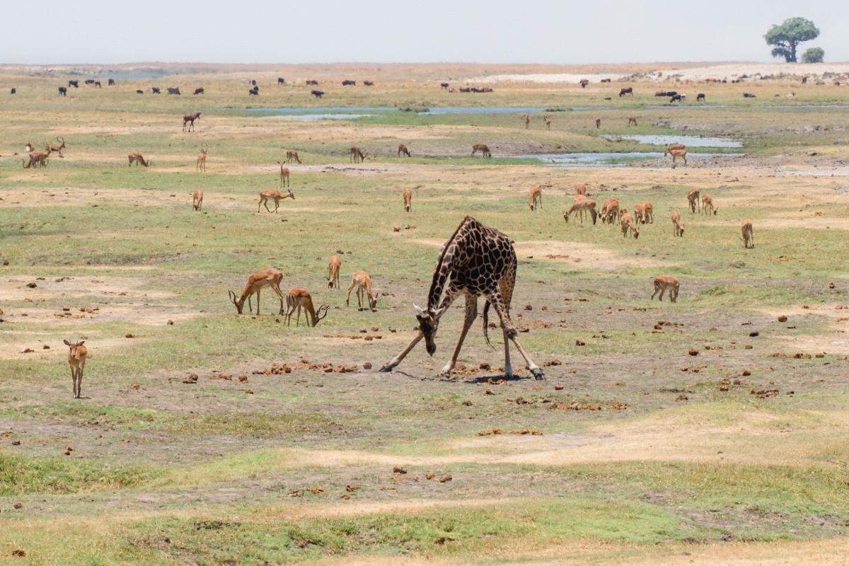 Chobe National Parc – beautifultwiga