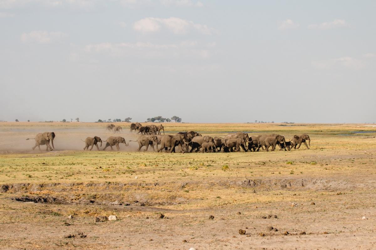 Chobe National Parc –Elephants