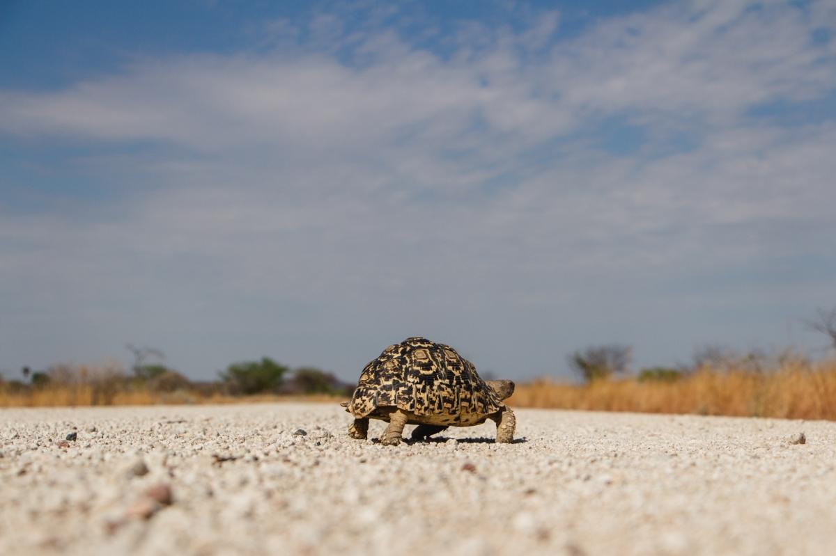Namibia – Etosha toSesfontain