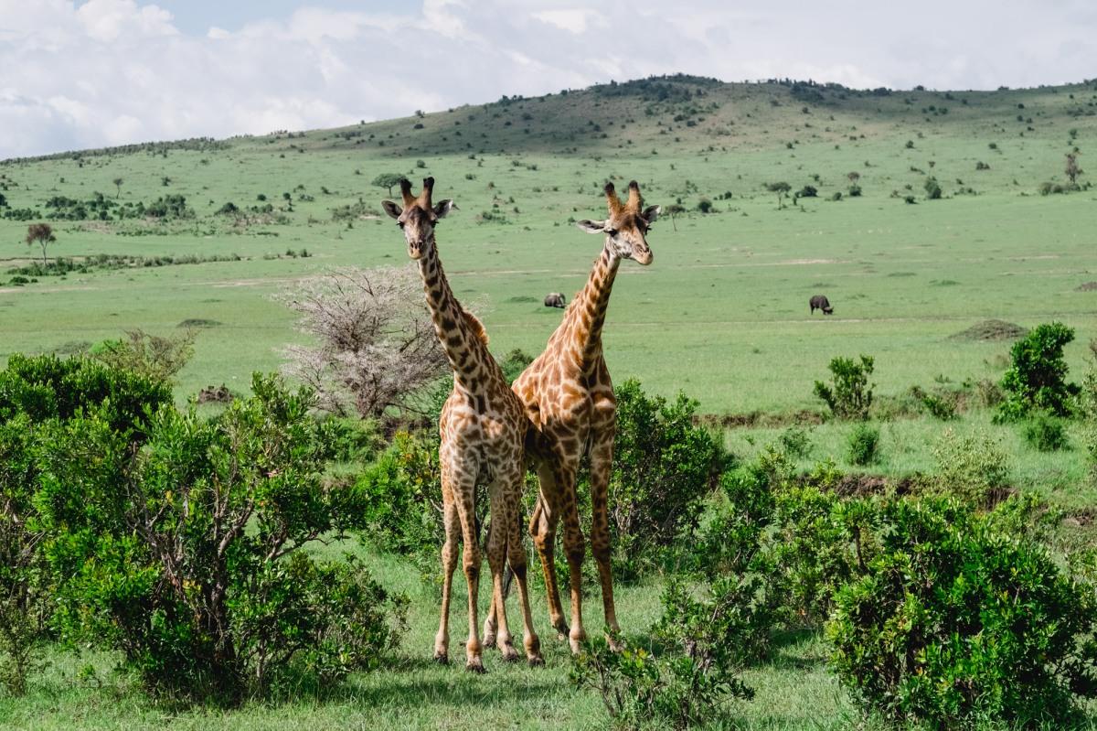 Masai Mara ♡Kenya